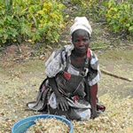 A Mugwere lady attends to her harvest