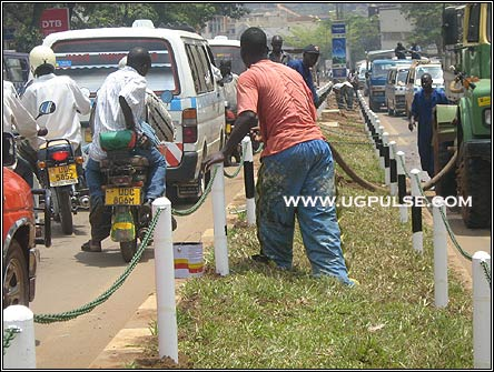 Keep off the grass: Fences have been erected around the grass that has been planted along Kampala's streets