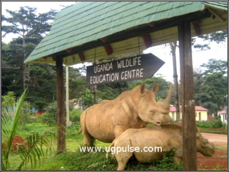 Uganda Wildlife Educational Centre (UWEC)